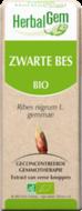 Zwarte Bes - Ribes nigrum gemmae